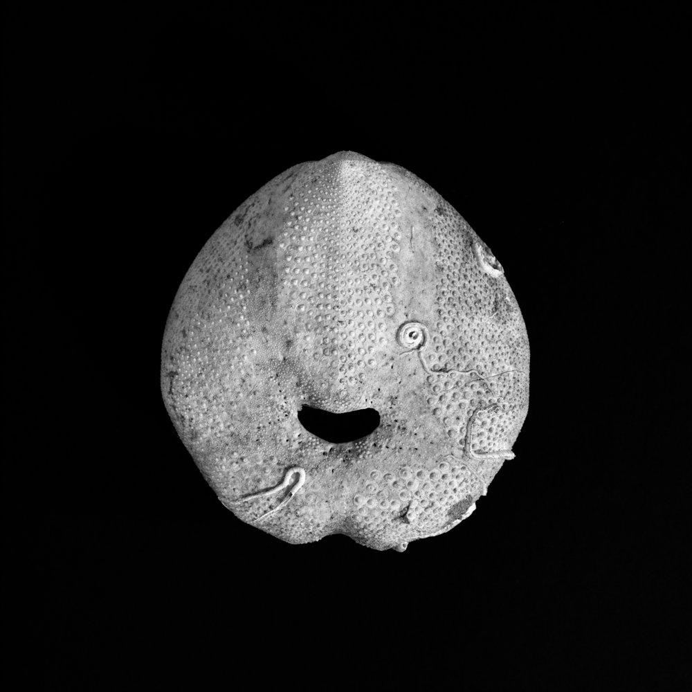 FU Fossils_77_01.jpg