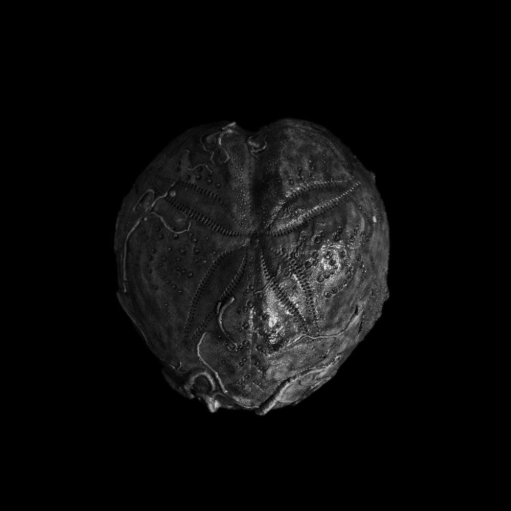 FU Fossils_71_02.jpg