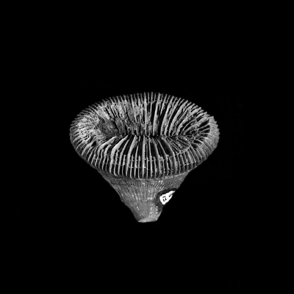 FU Fossils_70_01.jpg