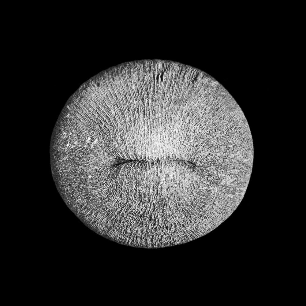 FU Fossils_64_02.jpg