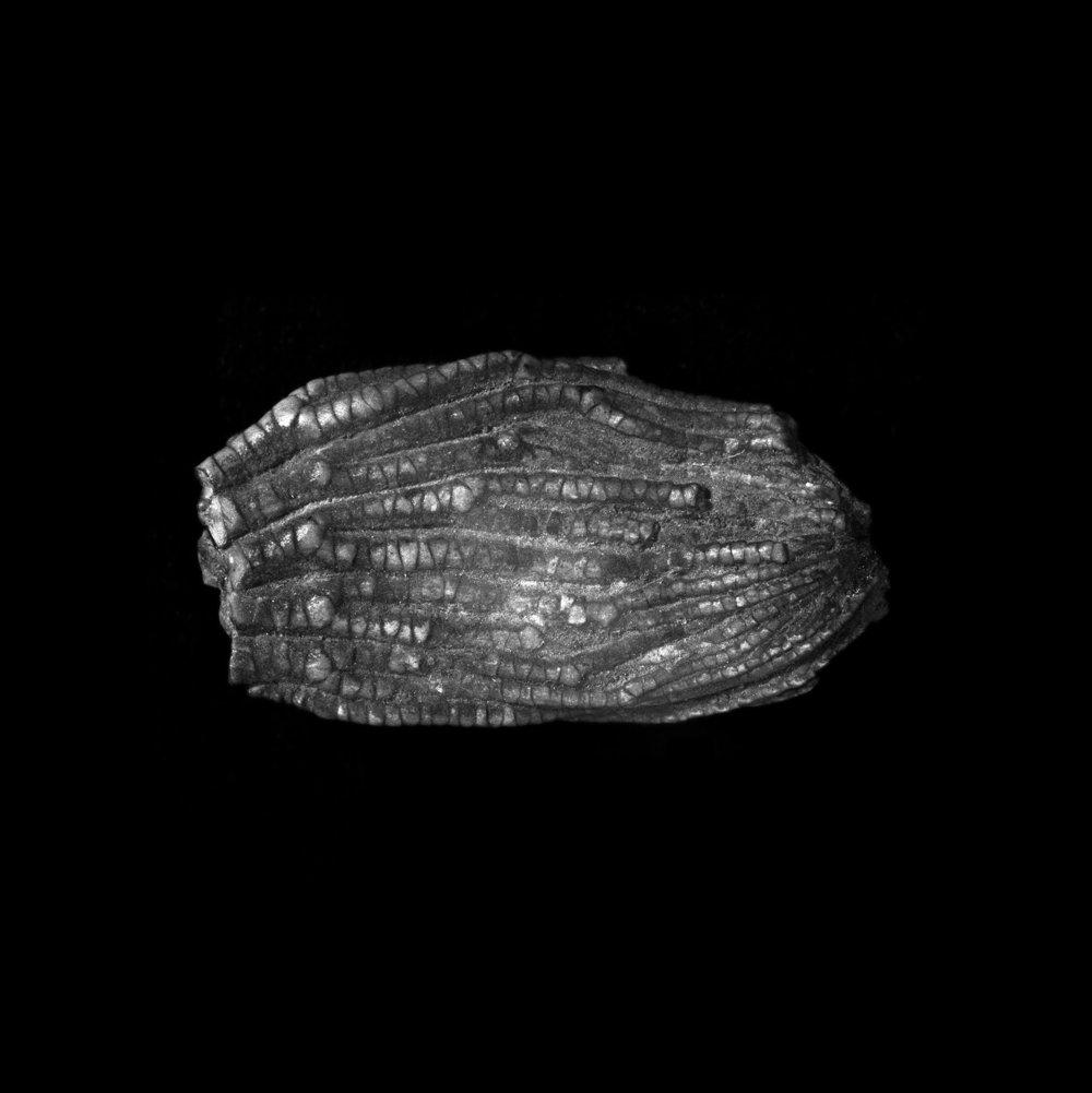 FU Fossils_58_01.jpg