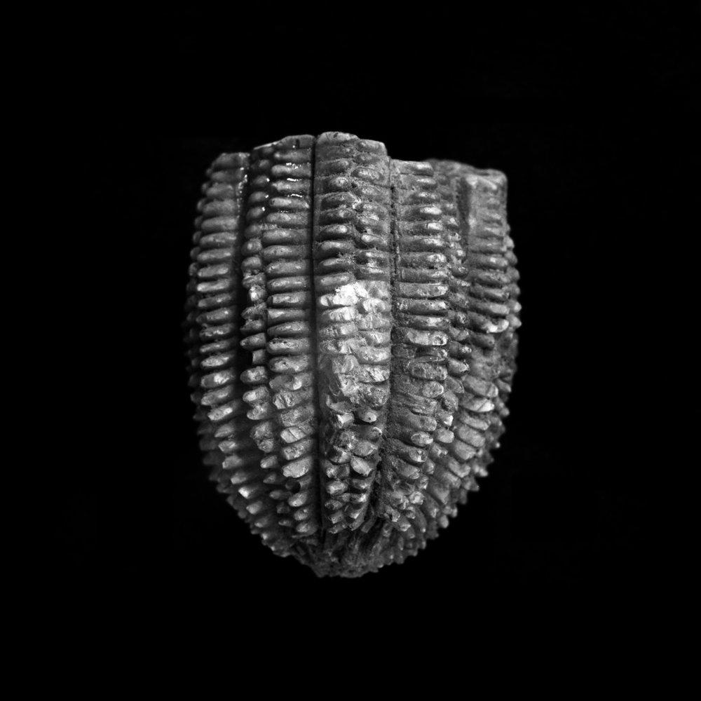 FU Fossils_56_01.jpg