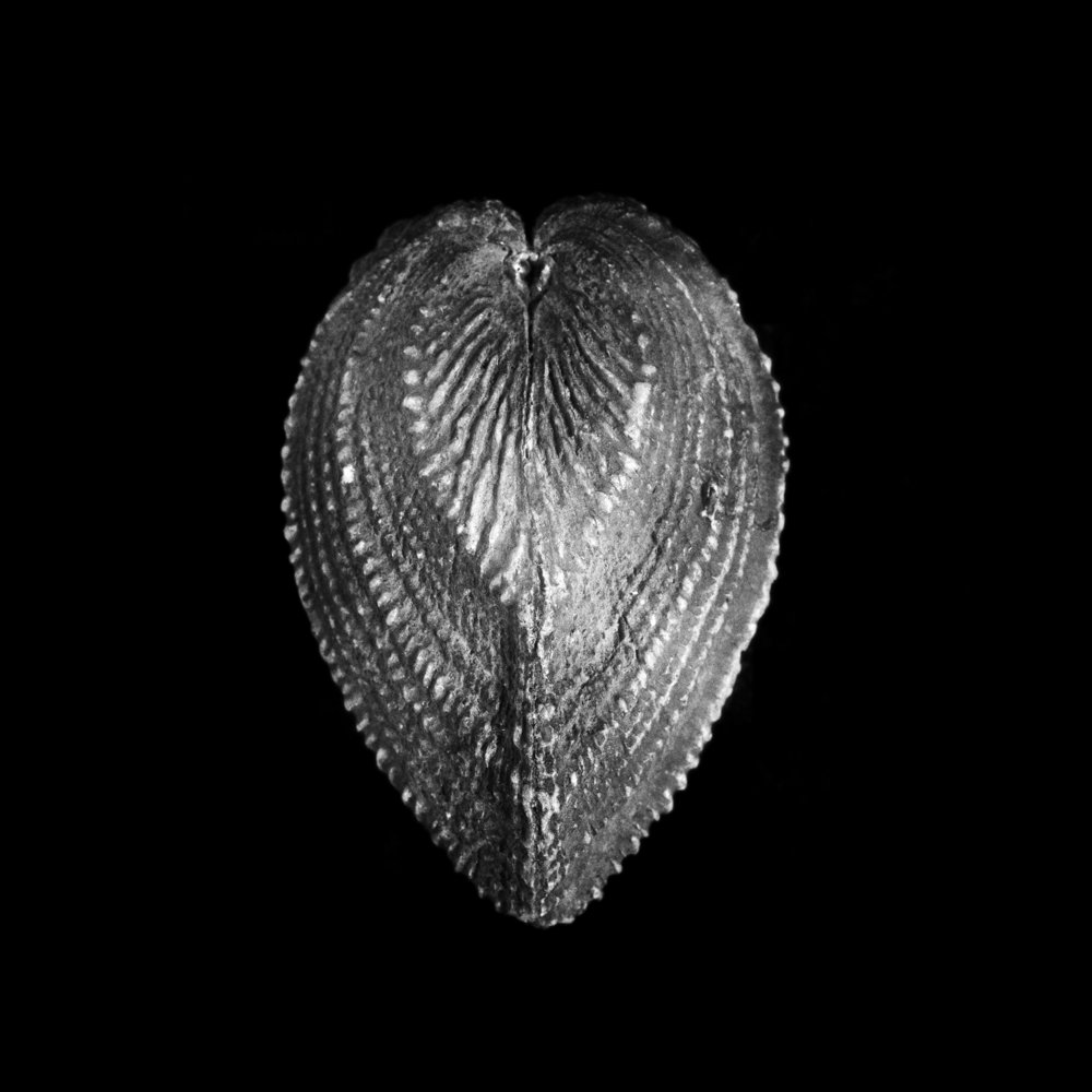 FU Fossils_48_01.jpg