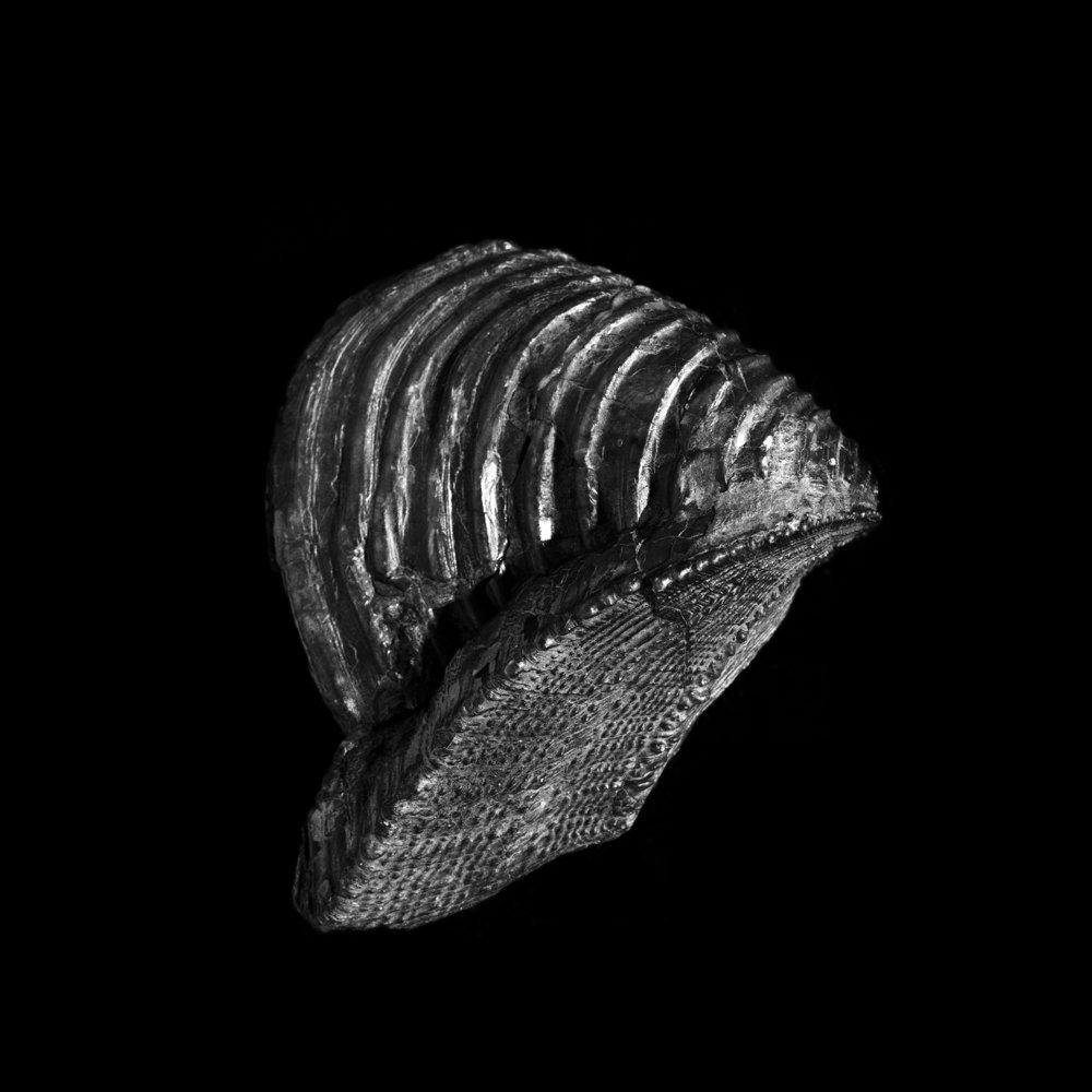 FU Fossils_44_01.jpg