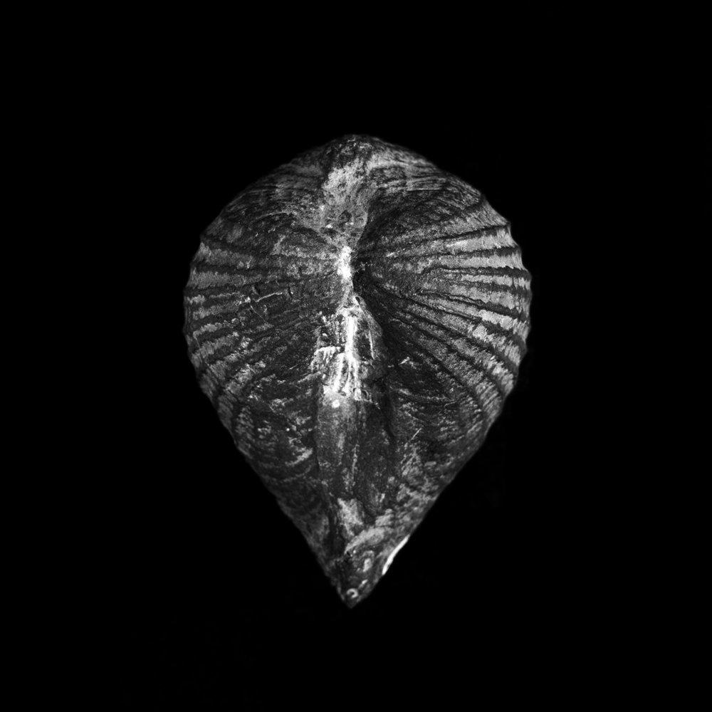 FU Fossils_42_01.jpg