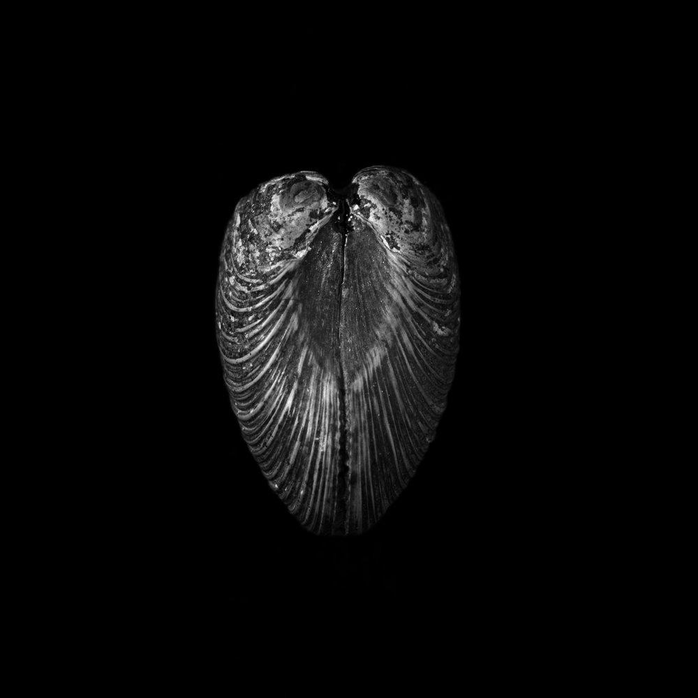 FU Fossils_41_01.jpg