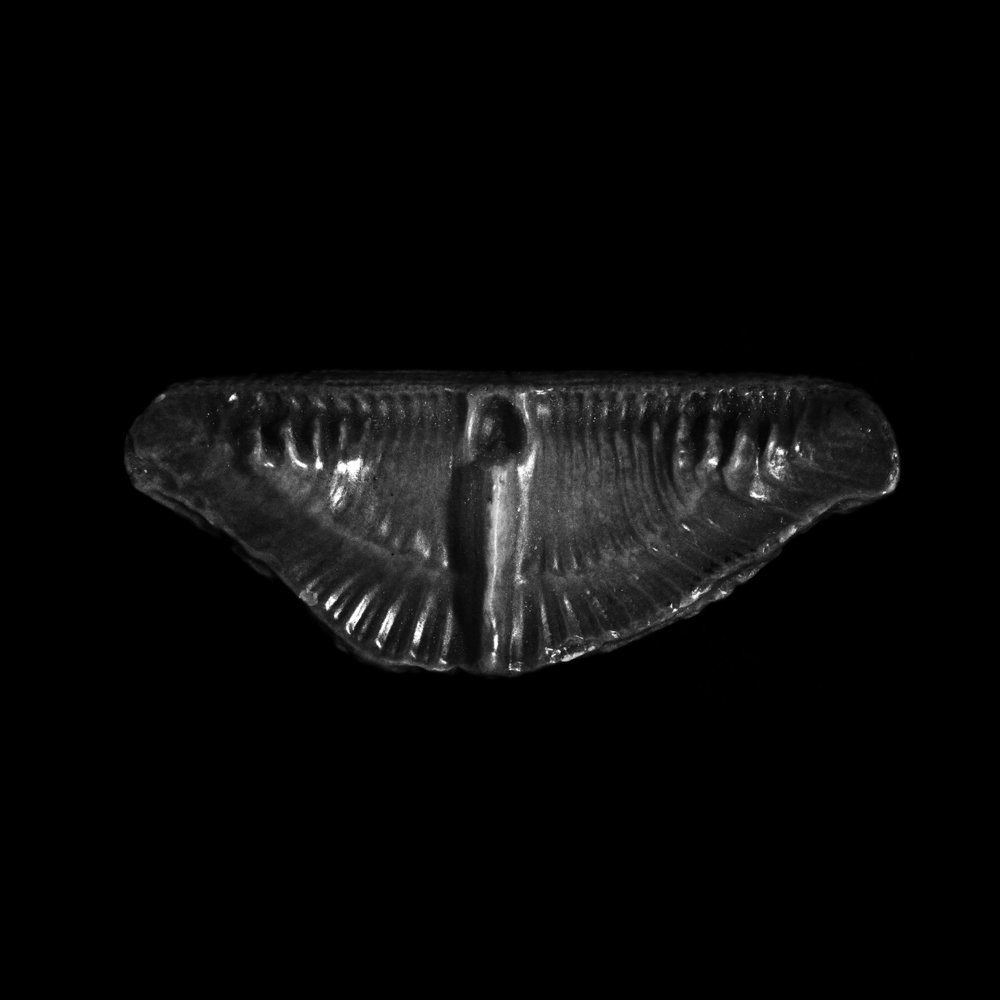 FU Fossils_28_02.jpg