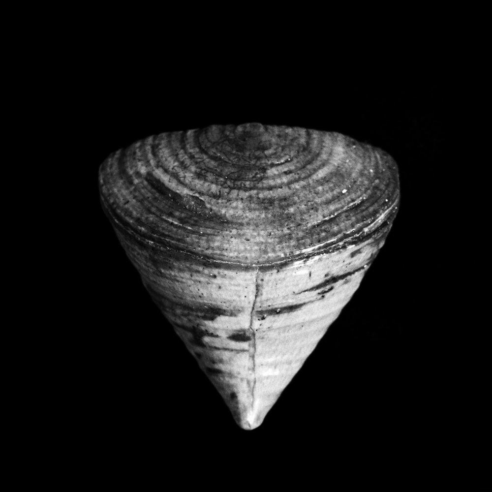 FU Fossils_27_01.jpg