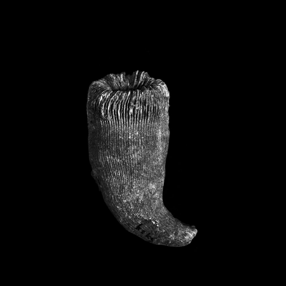 FU Fossils_09_01.jpg