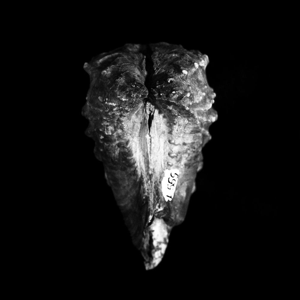 FU Fossils_40_01.jpg