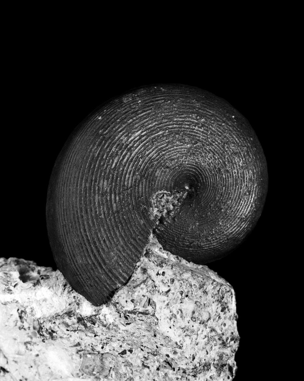 50_Paleontological Museum Zurich_4x5.jpg