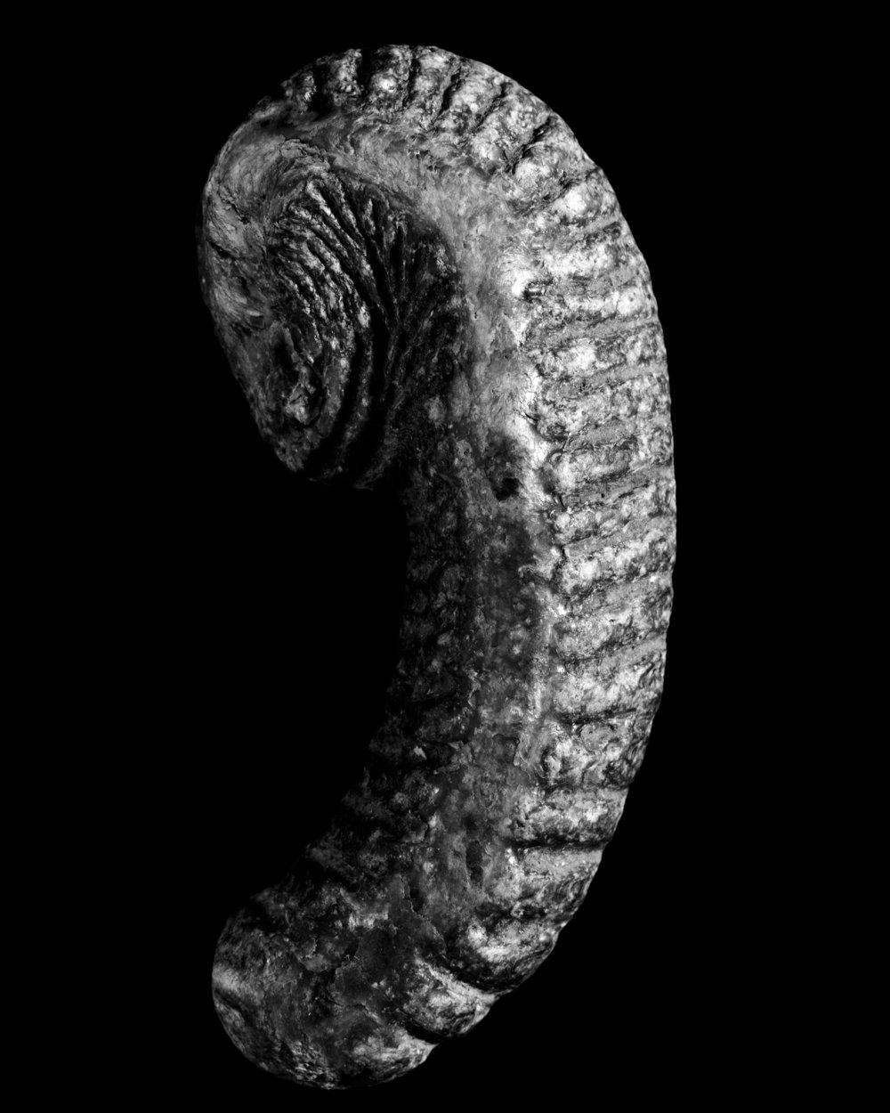 11_Paleontological Museum Zurich_4x5.jpg
