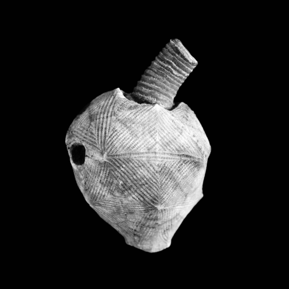 Echinocrinus interlaevigatus