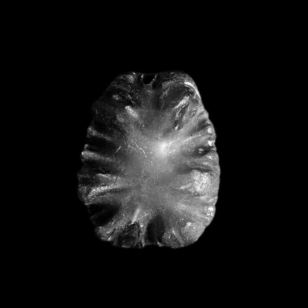 Crioceras sp. Helgoland, Neokom