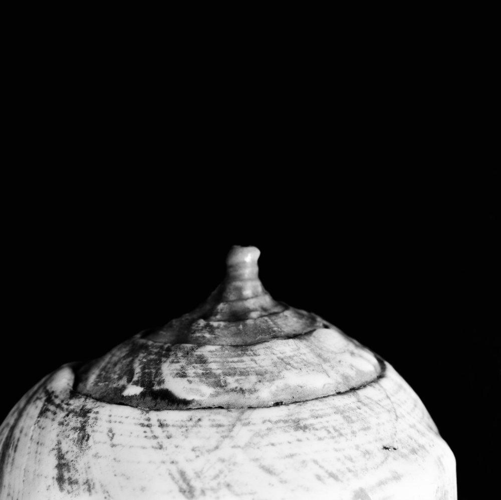 Turninella pyrum, Linnaeus