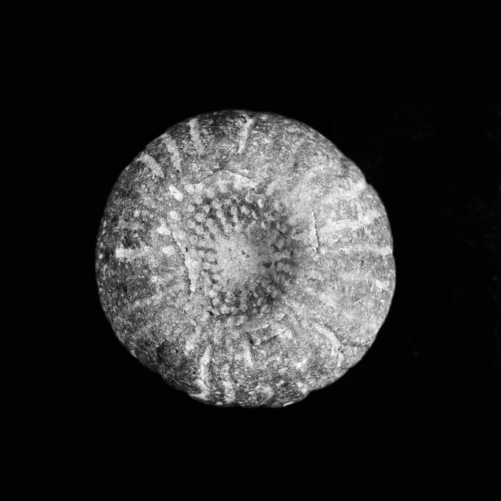 Astylospongia juglans, Silur