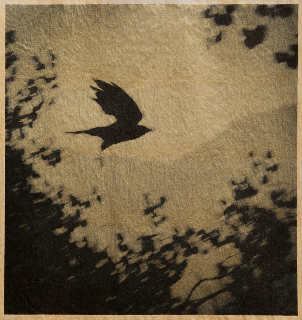 b_crowflying.jpg