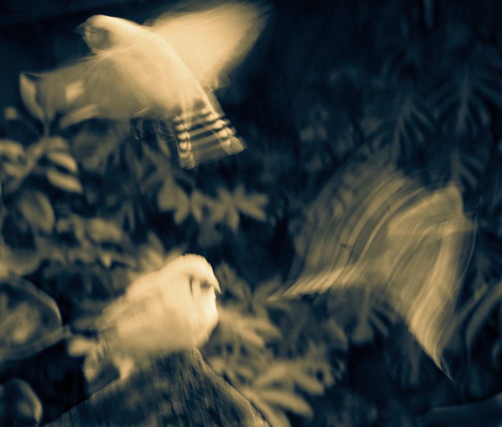 threebirdsmotionSPLITweb.jpg