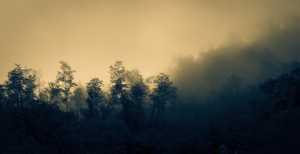 treesinfogSPLITweb.jpg