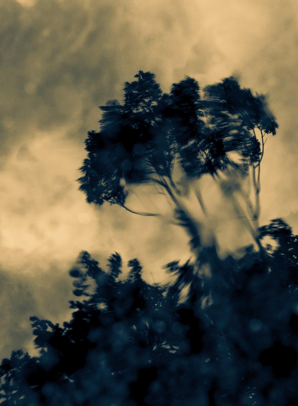 treesinpoolSPLITweb.jpg