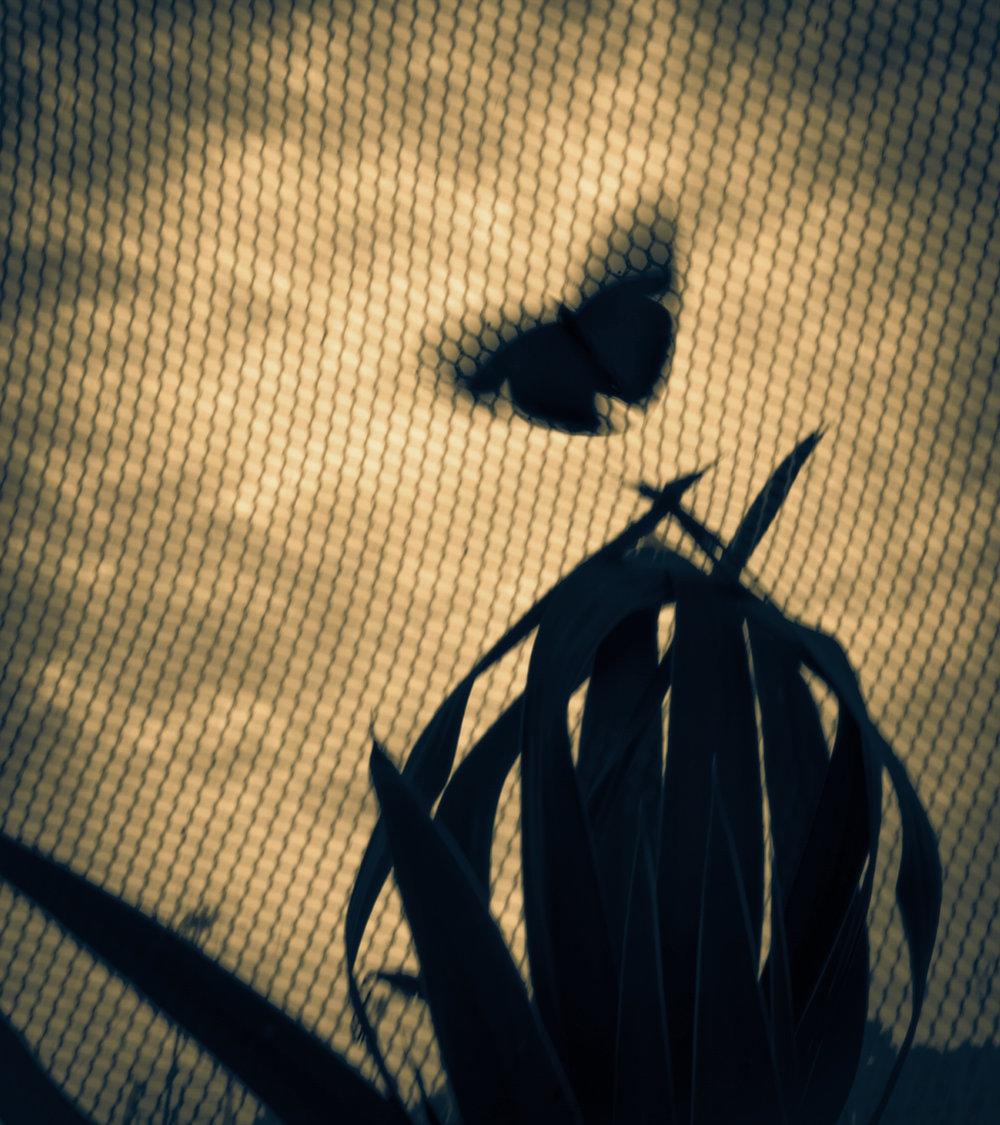 butterflyandcactusSPLITweb.jpg