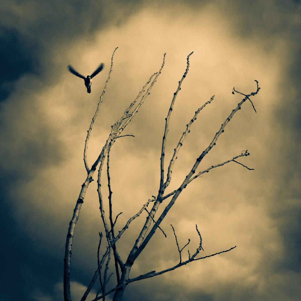 birdandtreeSPLITweb.jpg