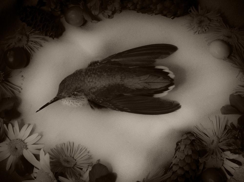 hummerinflowercircle-2.jpg