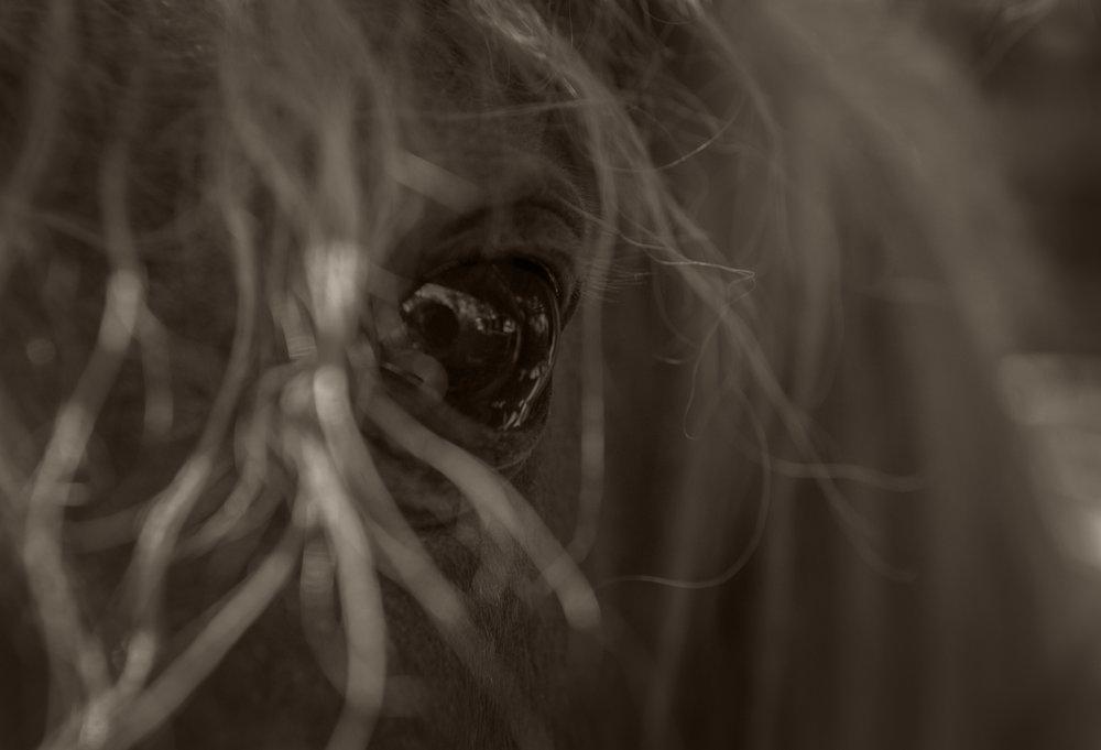 horseeye.jpg