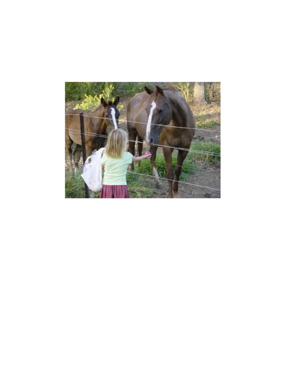 horse rescue picture.jpg