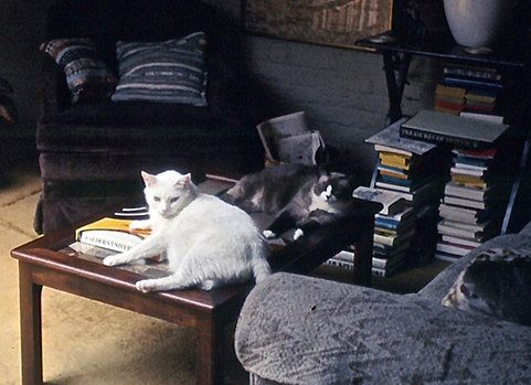 Moose, in the foreground, with Gudrun behind him, in the living room of the garret apartment in Brooklyn Heights where  Bunnicula  was begun. Much of the first draft was written on the sofa at the right.