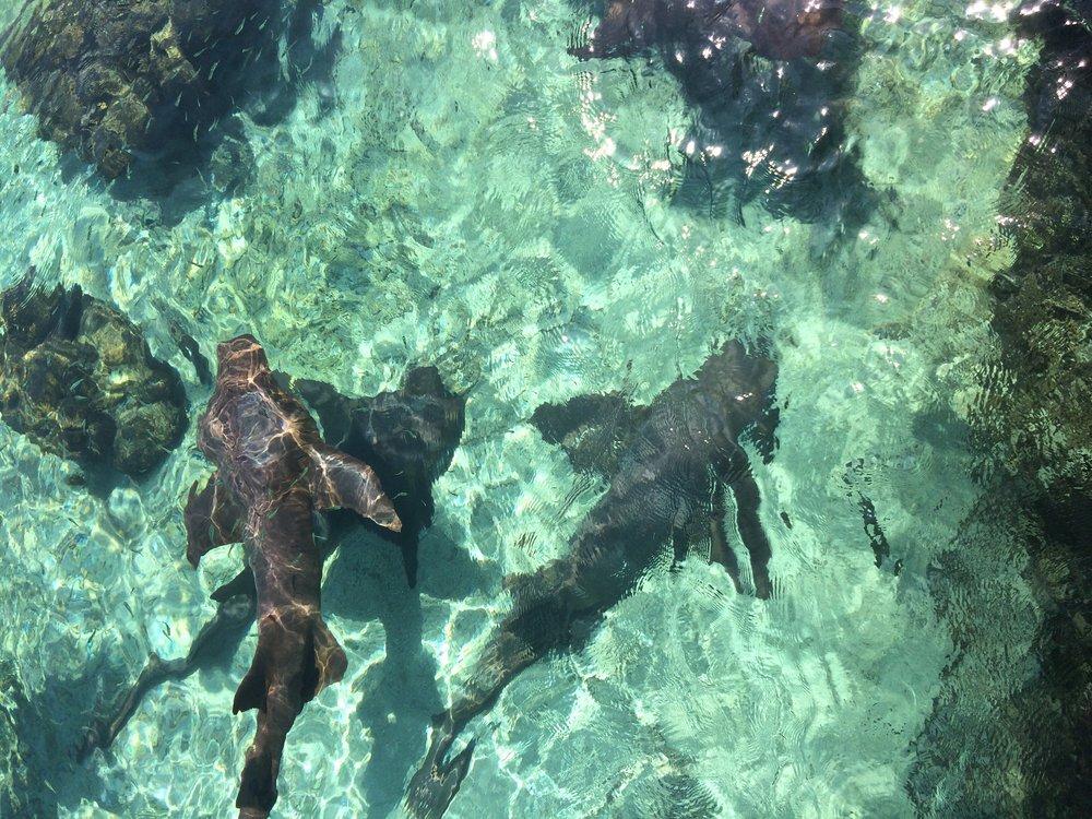 I've got friends in [clear waters].