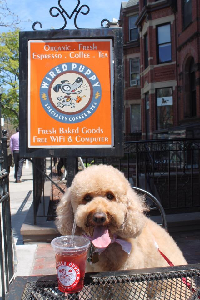 Wired Puppy - Coffee and doggies. What else do you even want? (Jackie L, Yelp)