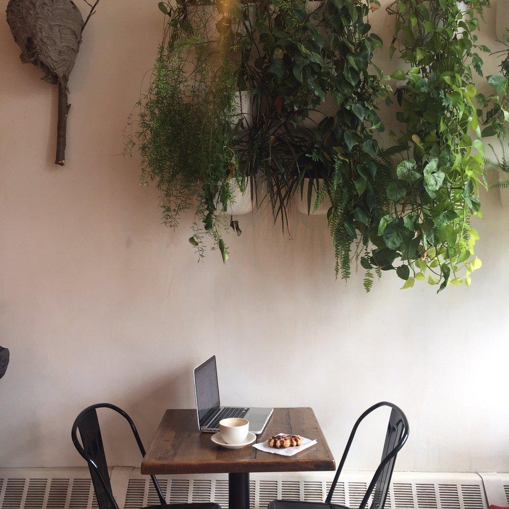 Curio Cafe -