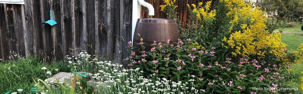 Raingarden cistern 2.jpg