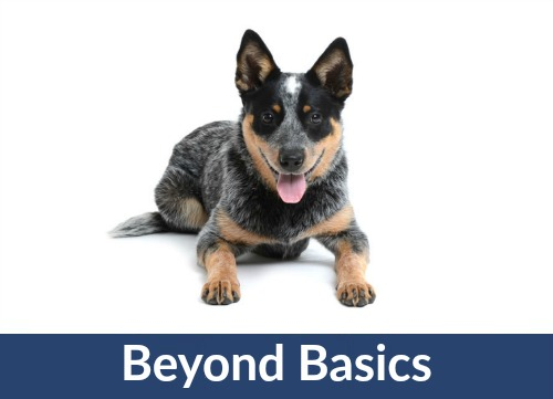 dog tech support. dog/puppy essentials: basic training and social skills dog tech support