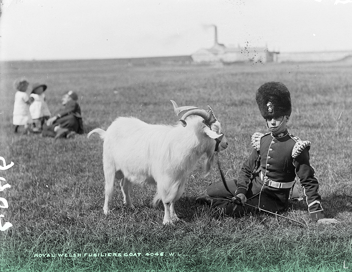 L.  Circa 1887 // Taken near Fermoy, Co. Cork, this is a Royal Welsh Fusilier with the Regimental Goat, complete with strap-on crest.