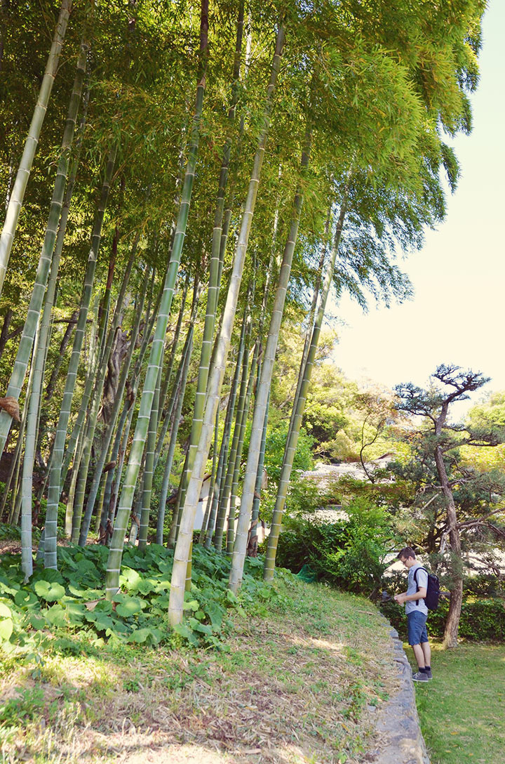 Gardens of the Saihō-ji
