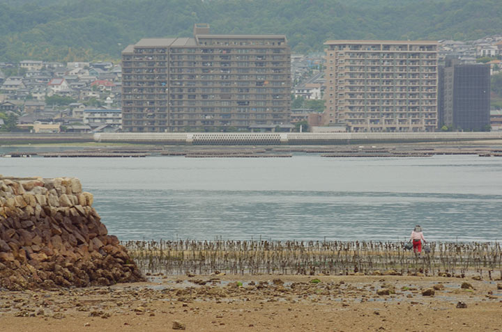 The Miyajima beach is a popular spot for gathering crabs and other sea food