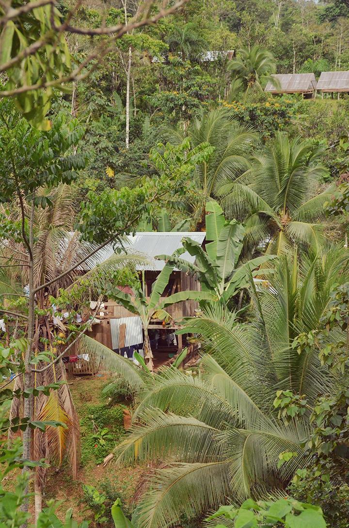 Oribe chocolate farm