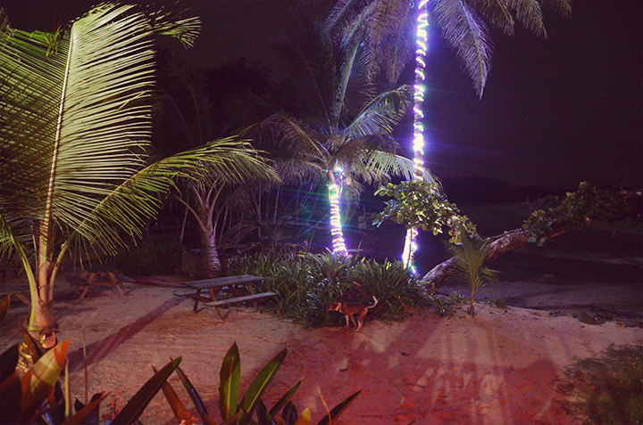 Punta Lava, Bastimentos