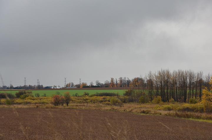 farm-f.jpg