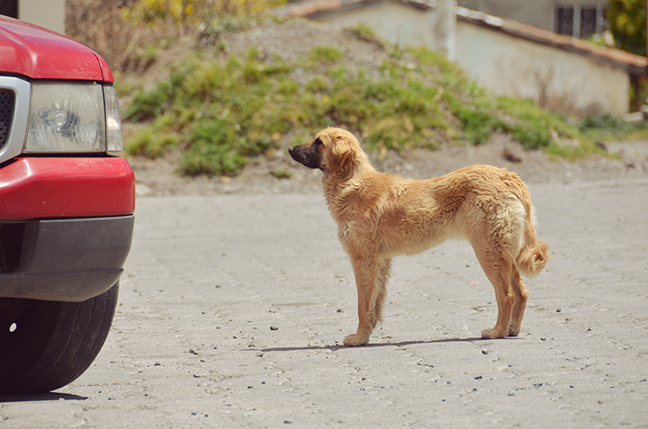 dogs9.jpg