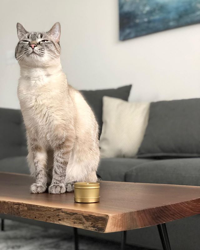 Happy Easter/Resurrection Sunday from Jynx on top of our newest live edge table. Our brother and sister in law sent us this photo of their new table, we're really happy with the way it turned out. • #jonmartinwoodworking #liveedge #liveedgecoffeetable #coffeetable #catsofinstagram #cat #carpenter #woodworker #woodworking