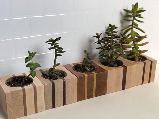 All our friends in a row. Love these colored planters, available on our Etsy. • #jonmartinwoodworking #jmwoodworking #planter #succulents #succulentplanter #succulentlove #succulentlover #succulentgarden #succulente #etsy #goteamflourish #etsyseller #maple #mahogany #walnut #cherry #paudauk #purpleheart #yellowheart