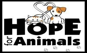 Cat rescue - Cat and dog toys, treats, animal related items  http://www.petfinder.com/shelters/kittyadopt.html