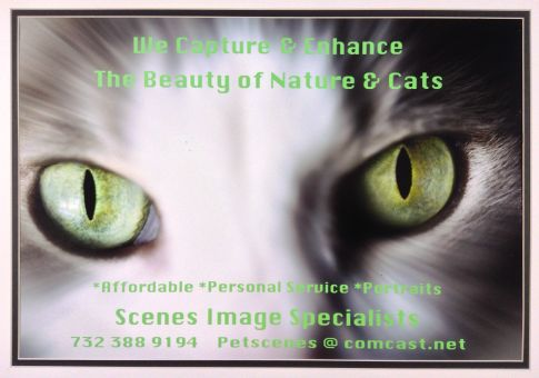 pet scenes   petscenes@comcast.net