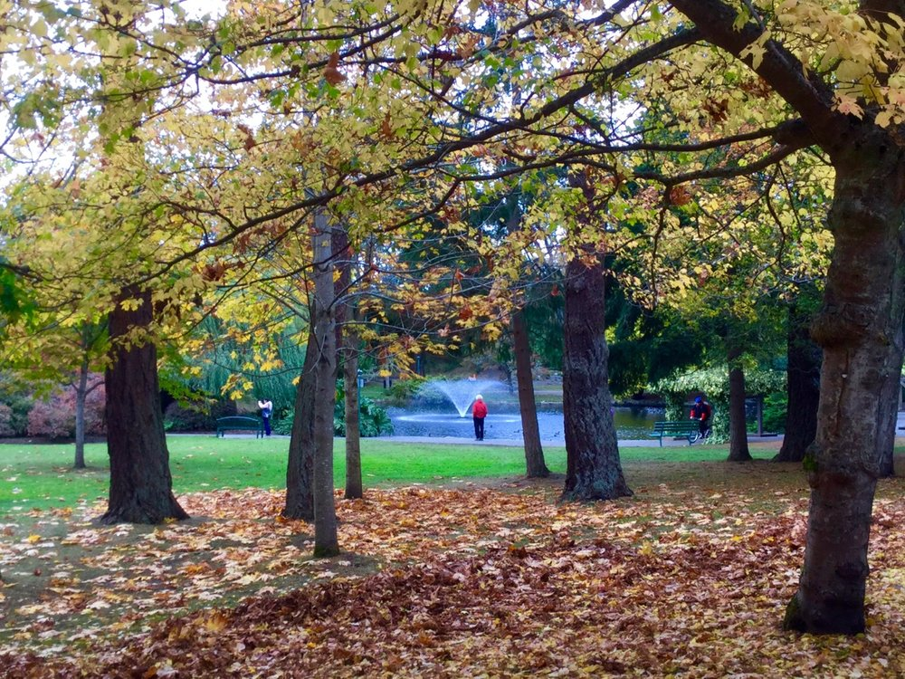 Walk with an arborist in Beacon Hill Park on Oct. 10th. Photo by Robert Hawkes.