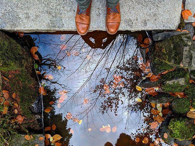 Autumn in Portland #portland #fall