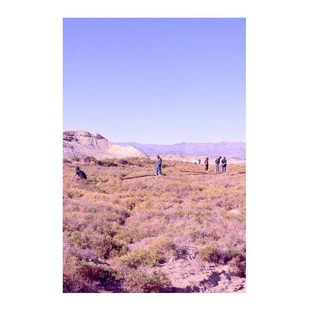 Desert things.