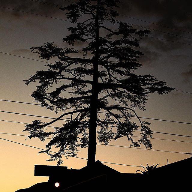 tree in highland park last night.